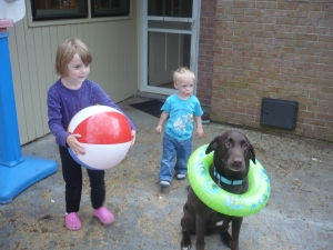 Fudge, the patient Labrador