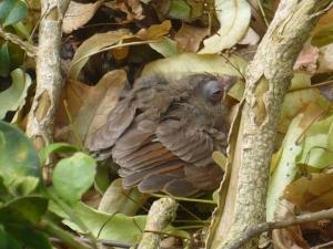 Baby Bird Down