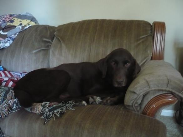 Fudge Does Sofas
